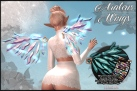 Araleus Wings MAIN